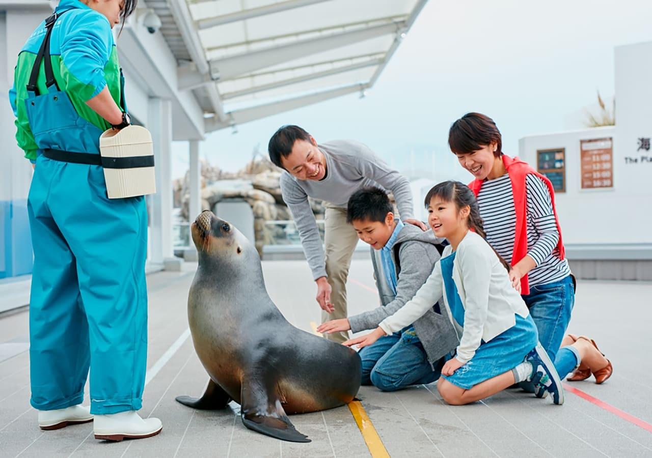 仙台うみの杜水族館のアシカとのふれあい