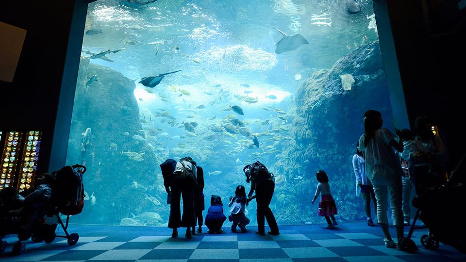 34-aquarium-tokyo-enosui-3
