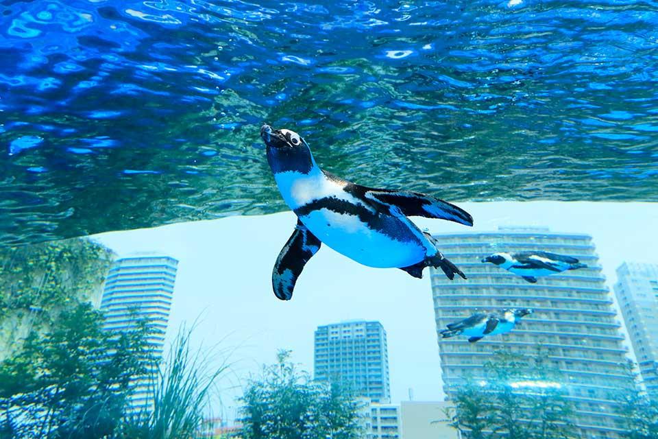 34-aquarium-tokyo-sunshine-1