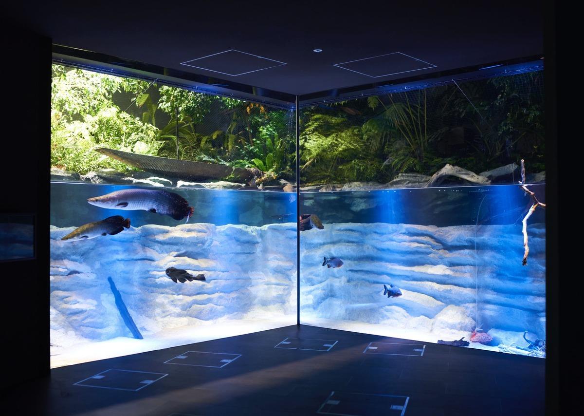 川崎水族館(カワスイ)の水槽展示