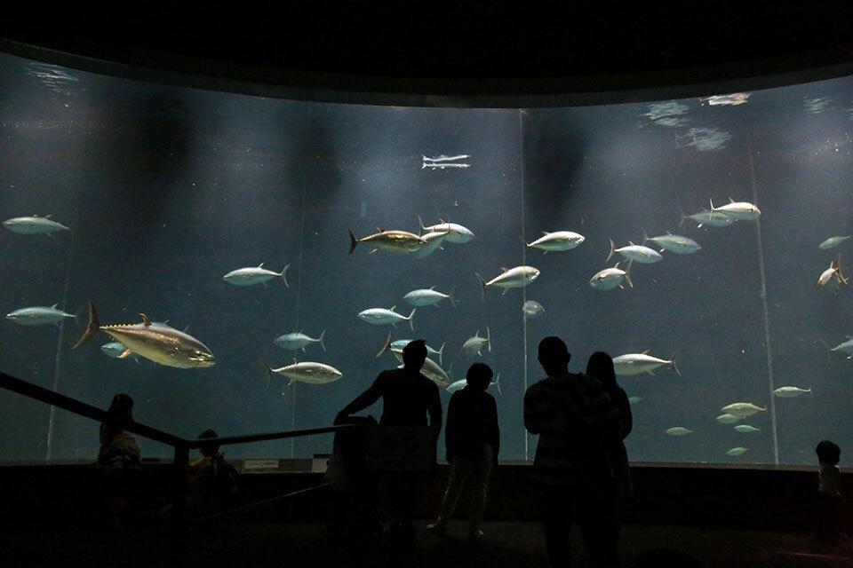 34-aquarium-tokyo-kasai-2