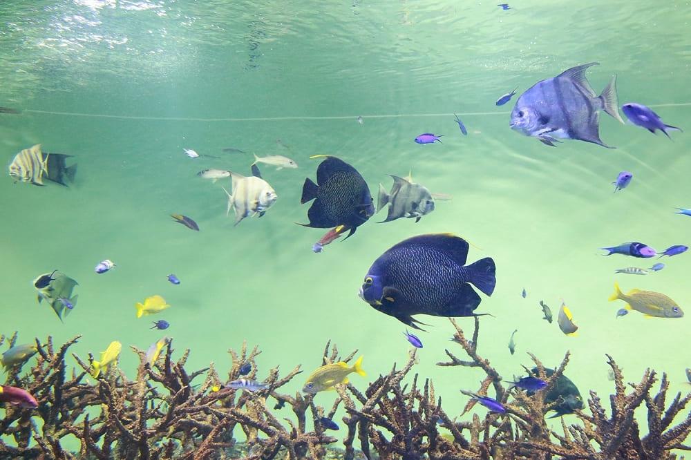 34-aquarium-tokyo-kasai-1