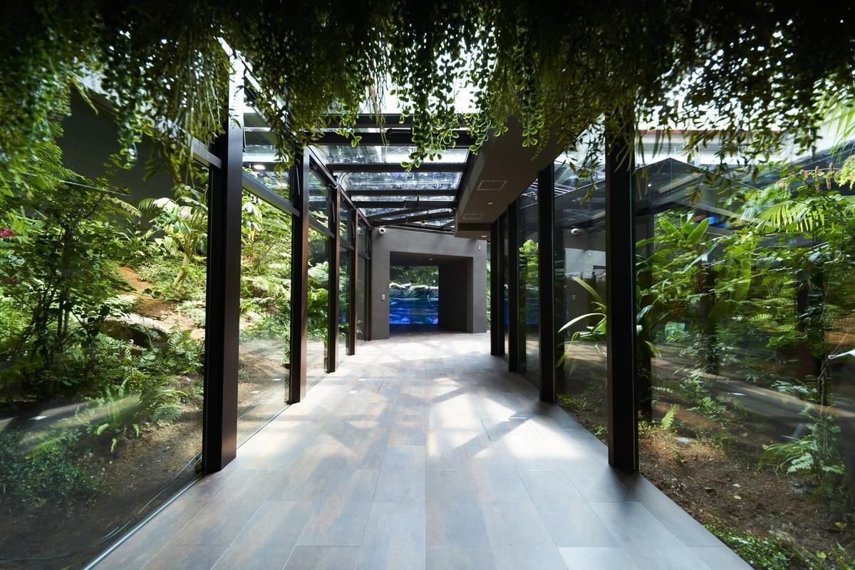 川崎水族館(カワスイ)のアマゾンを再現した展示