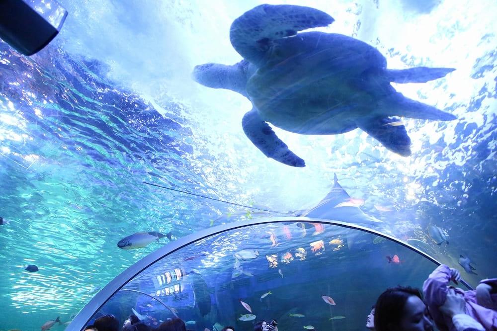 34-aquarium-tokyo-shinagawa-2